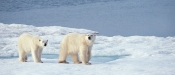 Silversea Cruises to the Arctic